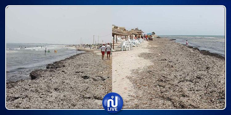 إلغاء 80 % من حجوزات إقامة سياحية بالبقالطة بسبب تلوث الشاطئ