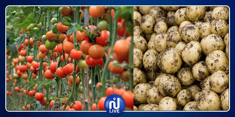 طماطم مصر مصابة بالسرطان !