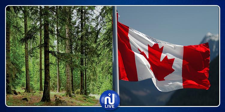 كندا تدعم مجموعة من المشاريع لفائدة البلديات الغابية بالشمال الغربي