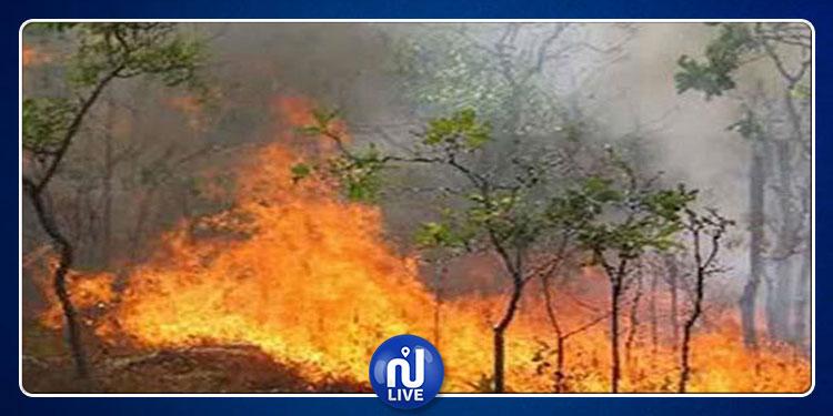 حفوز.. حريق يأتي على مساحة واسعة من الأشجار المثمرة