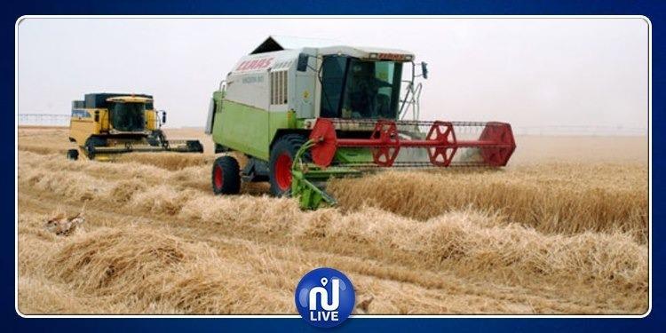 تقدم موسم الحصاد وتجميع الحبوب بنسبة 87 بالمائة في بنزرت