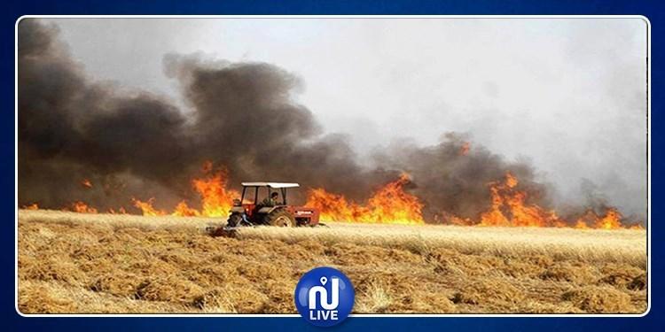 Bizerte : un incendie ravage près de 10 hectares