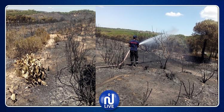حريق غابة البندق.. أضرار جسيمة لحقت الثروة الحيوانية البرية وأضرار بيئية عديدة
