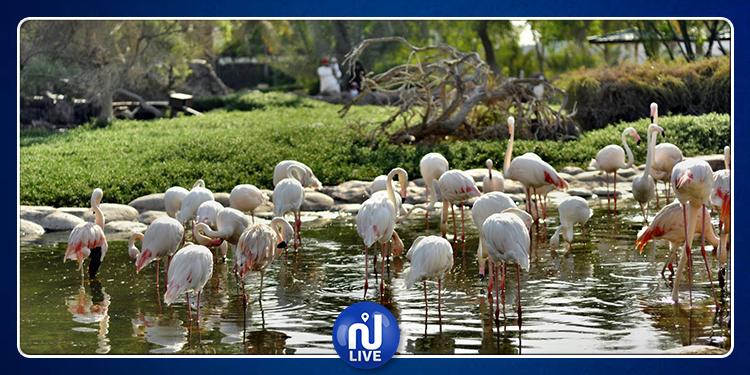 توقيع اتفاقية تعاون في مجال حماية الطيور البرية وموائلها