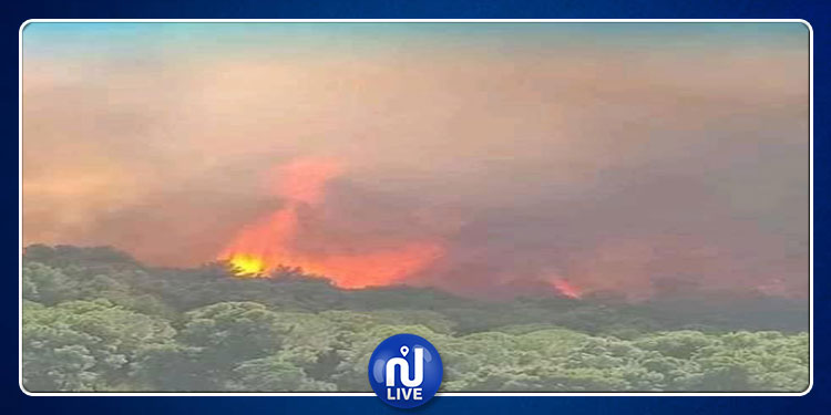 باجة.. حريق يأتي على3 هكتارات من النبات الغابي