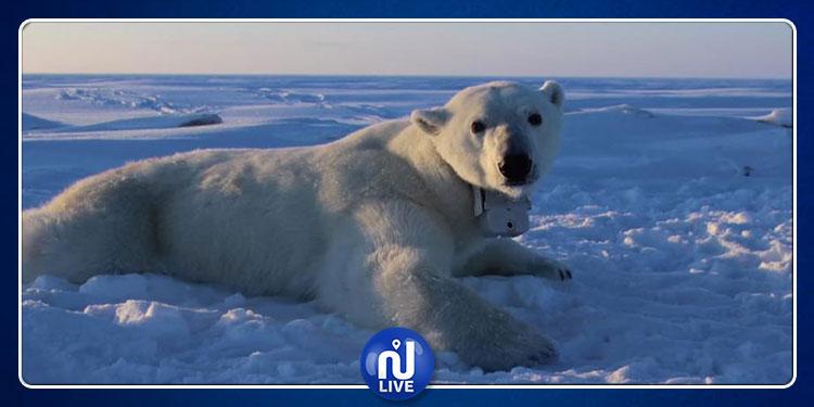 القطب الشمالي يسجل رقما قياسيا في درجات الحرارة