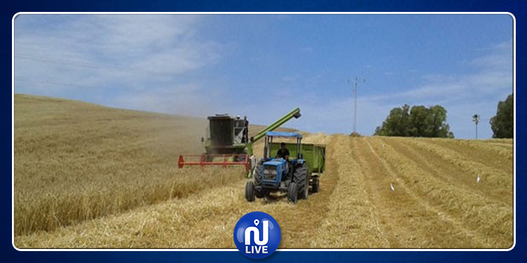 انتهاء موسم الحصاد بمنوبة وتجميع أكثر من 383 ألف قنطار من الحبوب
