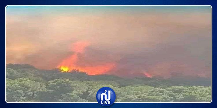 باجة : تواصل المساعي للسيطرة على حريق اندلع بجبل صباح