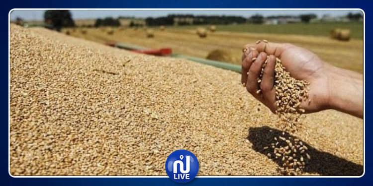 الكاف: إجلاء جزء كبير من صابة الحبوب وحماية الكميات المتبقية من الأمطار