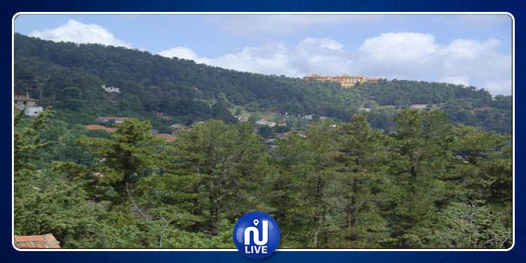 المطالبة بفتح تحقيق في تمكين وزير الفلاحة مواطنا من استغلال 200 هكتار من غابات الصنوبر !
