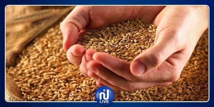 توفيق السعيدي: ''الكمية المجمعة من القمح اللين لا تكفي لشهر استهلاك''