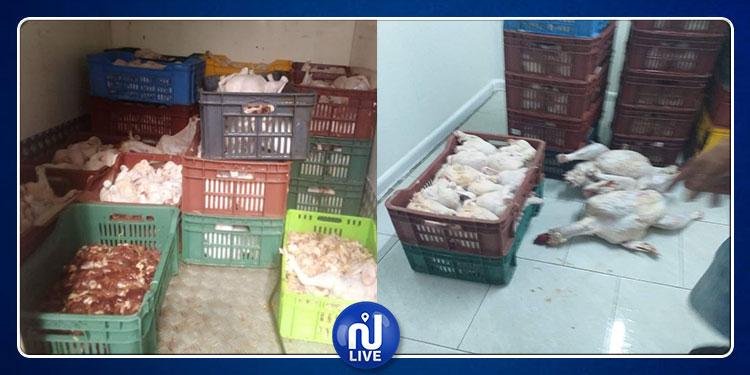 قرمبالية : حجز 400 كلغ من الدجاج الفاسد