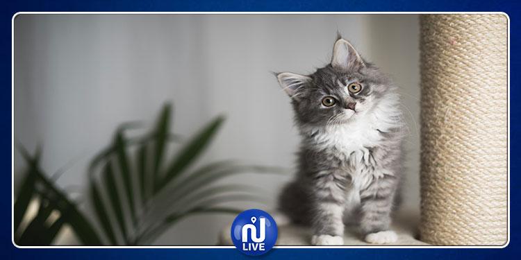 تربية القطط  تقلل من التوتر  وتقي من هذه الأمراض