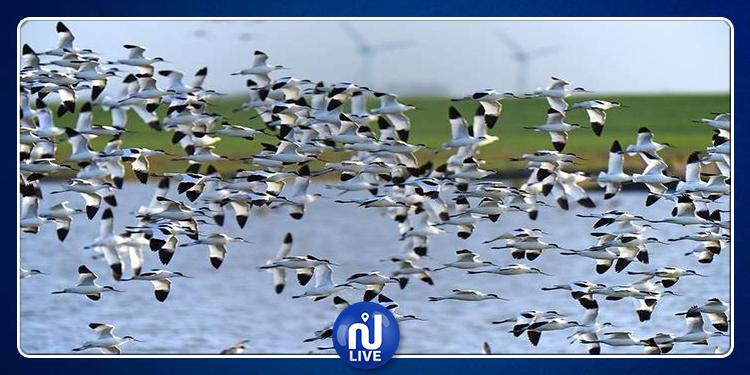 بنزرت: مدينة غار الملح تحتفي باليوم العالمي للطيور المهاجرة