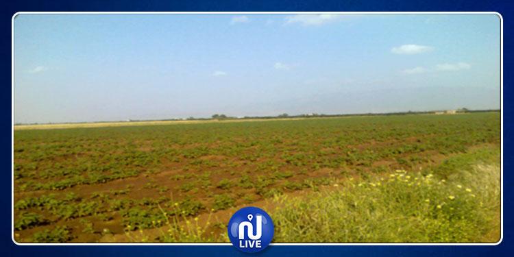باجة : الدولة تسترجع قرابة 54 هكتارا من أراضيها المستولى عليها