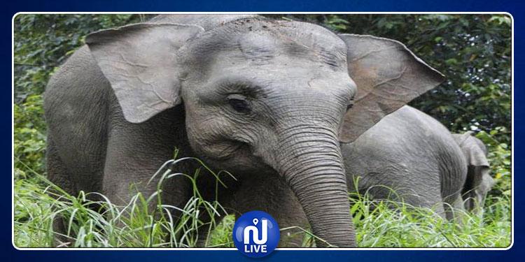 القبض على 4 أشخاص قتلوا ''الفيل القزم'' بوحشية !