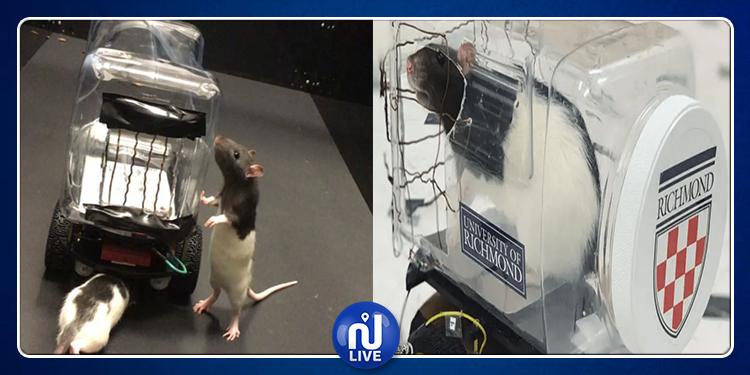 فئران تقود السيارات ! (فيديو)