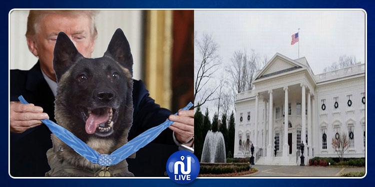 البيت الأبيض يستضيف  كلبا  شارك في عملية تصفية البغدادي