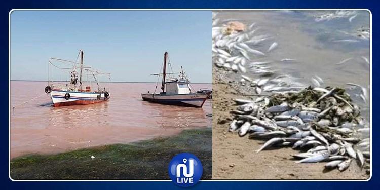 الكشف عن أسباب نفوق الأسماك و إحمرار مياه البحر في المهدية