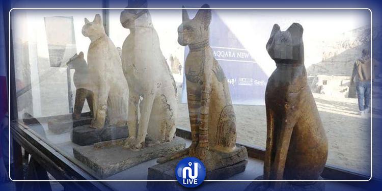 اكتشاف مومياوات حيوانية تعود إلى العصر الفرعوني