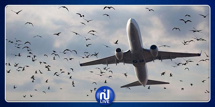 طائرة جزائرية  تعود أدراجها بسبب سرب طيور