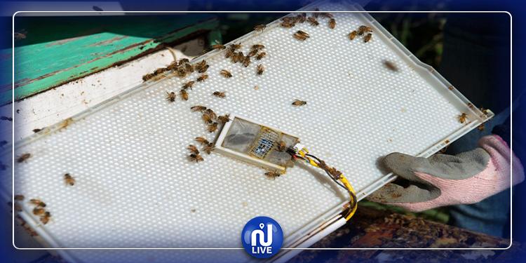 كفاءة تونسية تطّور جهاز استشعار لزيادة انتاج العسل (فيديو)
