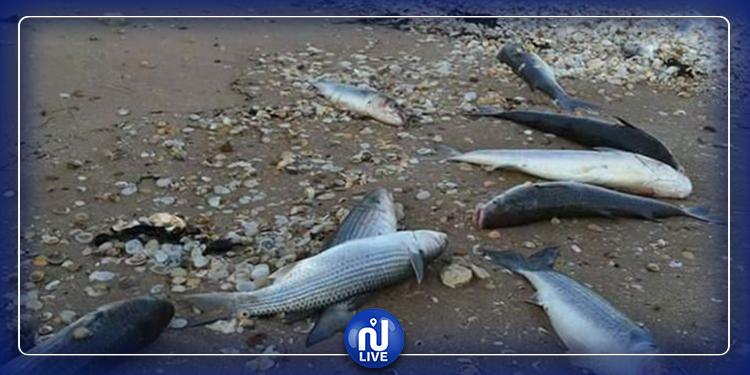 التعرف على أسباب نفوق كميات من سمك ''الكارب الصيني'' بزغوان