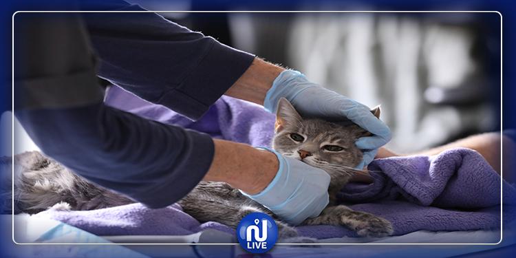 العثور على فيروس كورونافي قطط ووهان