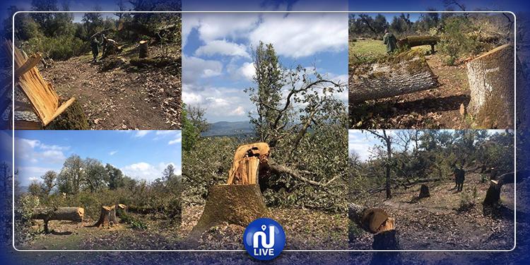 وزارة الفلاحة تدعو  لتطبيق  قانون  الإرهاب  على المتورطين في قطع أشجار الزان