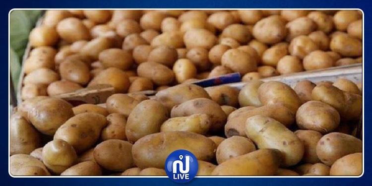 تونس تؤكّد جودة البطاطا المورّدة من مصر