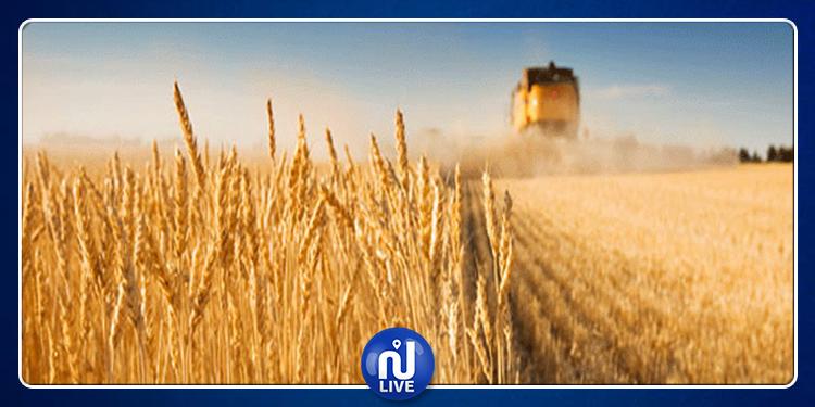 اتفاقية بين ديوان الحبوب والبنك الوطني الفلاحي لتمويل صابة الحبوب