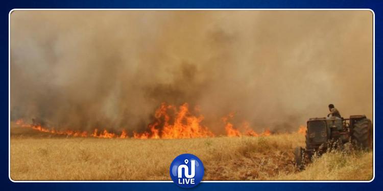 سليانة: حريق يأتي على 15 هكتارا من صابة الحبوب
