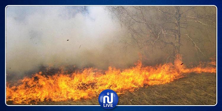 سليانة: إيقاف شخص بشبهة التورط في اندلاع الحرائق الأخيرة