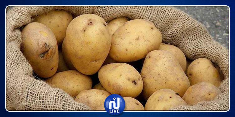 كميات البطاطا المورَّدة مؤخرا لا تتجاوز 5 بالمائة من حجم الاستهلاك
