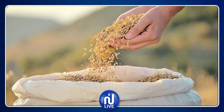 إجراءات وزارة الفلاحة لإجلاء صابة الحبوب وحل مشكل تخزينها