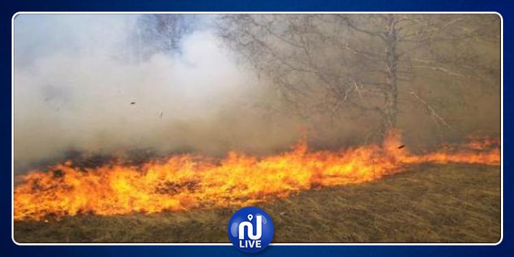 القصرين: السيطرة على حريق جبل عبد العظيم بفريانة