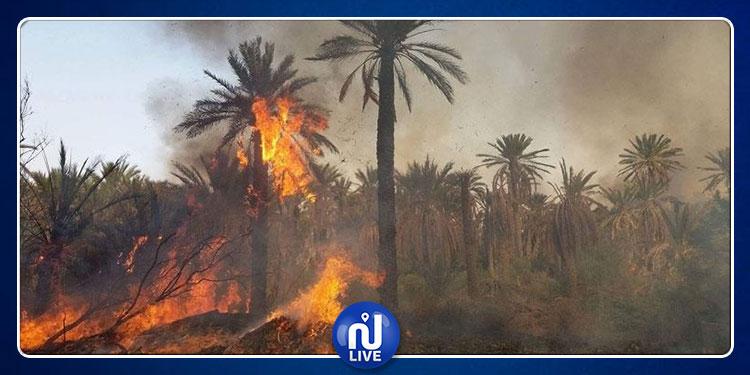 توزر: حريق يأتي على 239 نخلة
