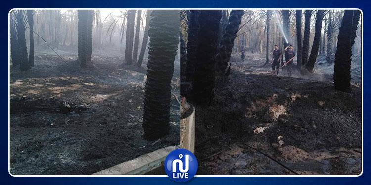 قبلي: حريق يأتي على 150 نخلة