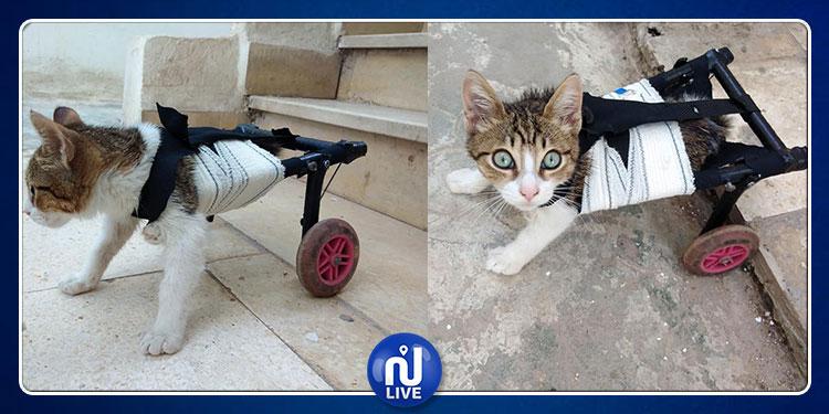 في حركة إنسانية رائعة: شاب تونسي يعيد الأمل لقطّة مبتورة الساقين (فيديو)