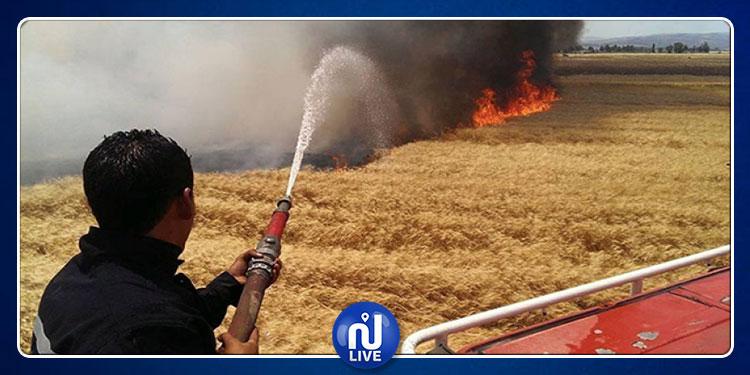 سليانة: حريق يأتي على 20 هكتارا من صابة القمح