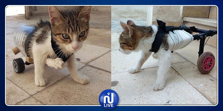 الشاب أحمد المناعي يكسب الرهان وقطّته تستعيد قدرتها على المشي (فيديو)
