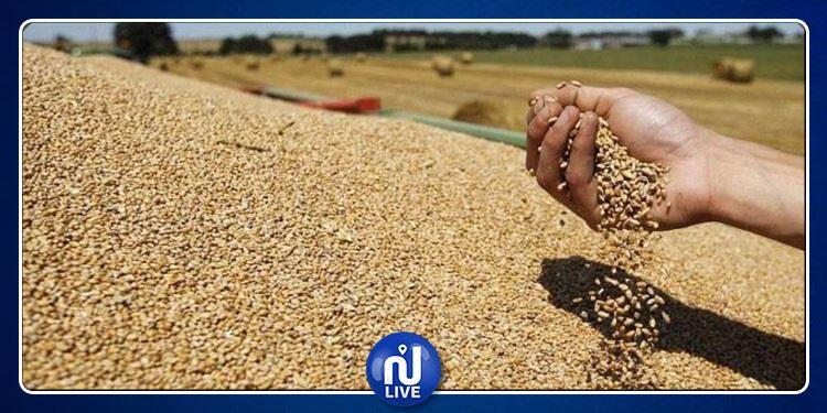 الكاف: مراكز التجميع لم تعد قادرة على استيعاب صابة الحبوب