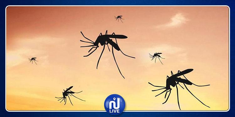ابتكار جديد يحمل الأمل بتخليص المنازل من أعتى أنواع البعوض (فيديو)