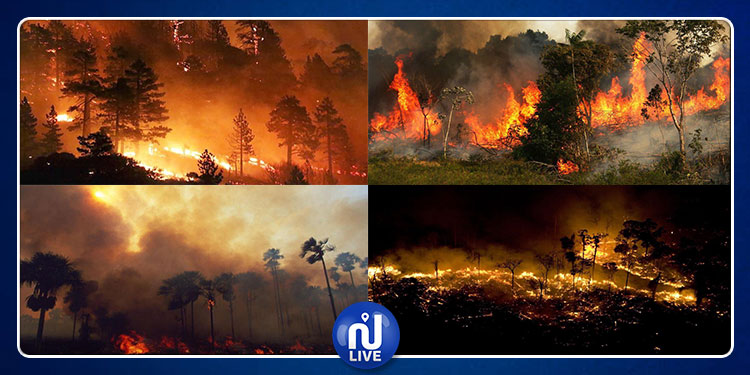 غابات الأمازون تحترق (صور+فيديو)