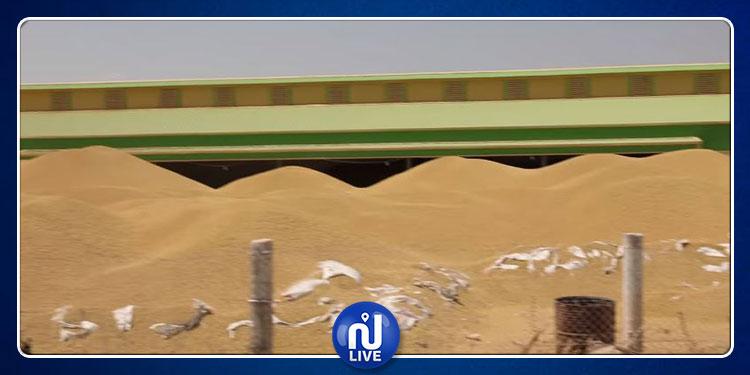 أمطار بولاية سليانة و''جبال'' الحبوب مكدسة في الهواء الطلق بسيدي بورويس