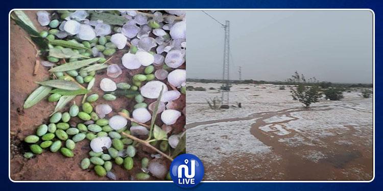 سيدي بوزيد: تساقط البرد يخلف أضرارا فلاحية