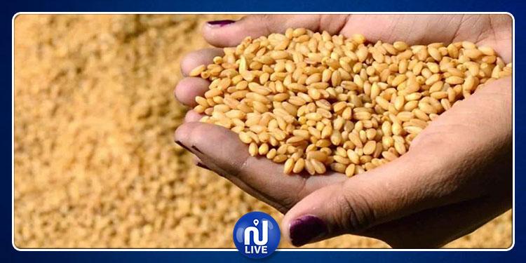 تونس تستورد 42 ألف طن من القمح و50 ألف طن من الشعير