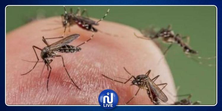 وزارة البيئة تنفي وجود علاقة بين وفاة فتاة بصفاقس والأمراض المنقولة بواسطة الحشرات