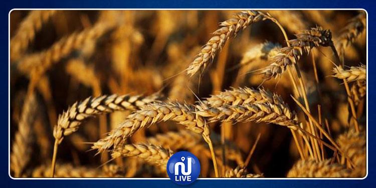 تونس تطرح مناقصة جديدة لتوريد 50 ألف طن من القمح