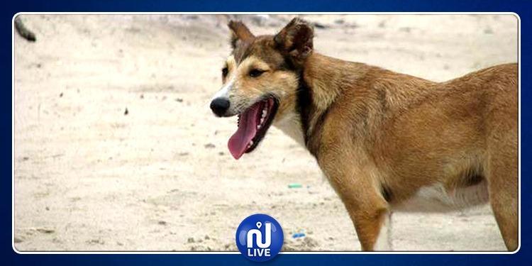 كلب سائب يحيل عون أمن على المستشفى